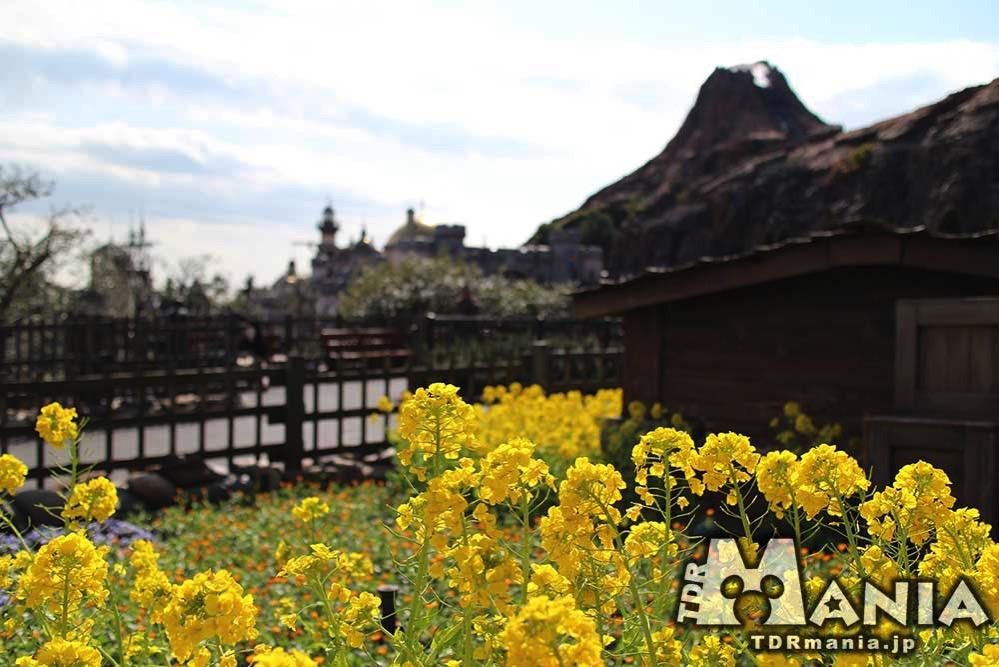 菜の花の黄色が映えるザンビ階段