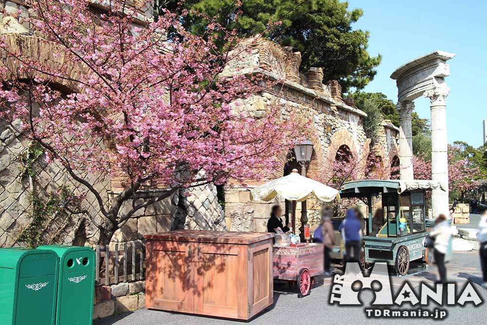 数本植えられている河津桜