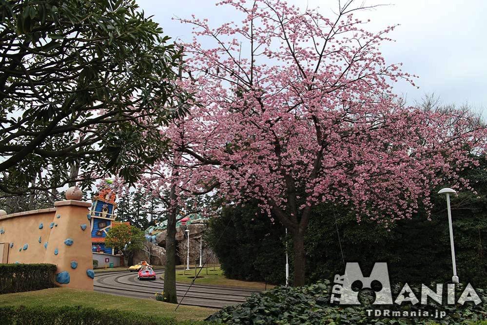 春の訪れをいたるところに感じる事ができる東京ディズニーリゾート